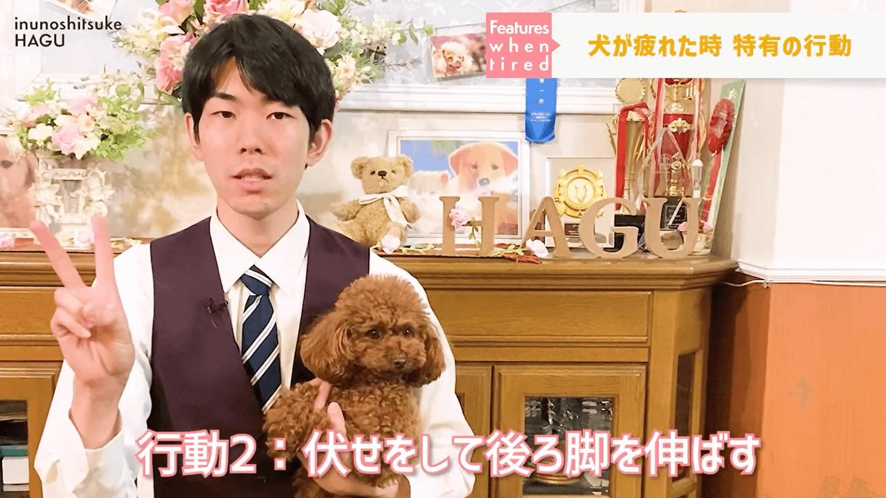 文京区の犬のしつけ教室で犬が疲れた時の行動を説明しているドッグトレーナー