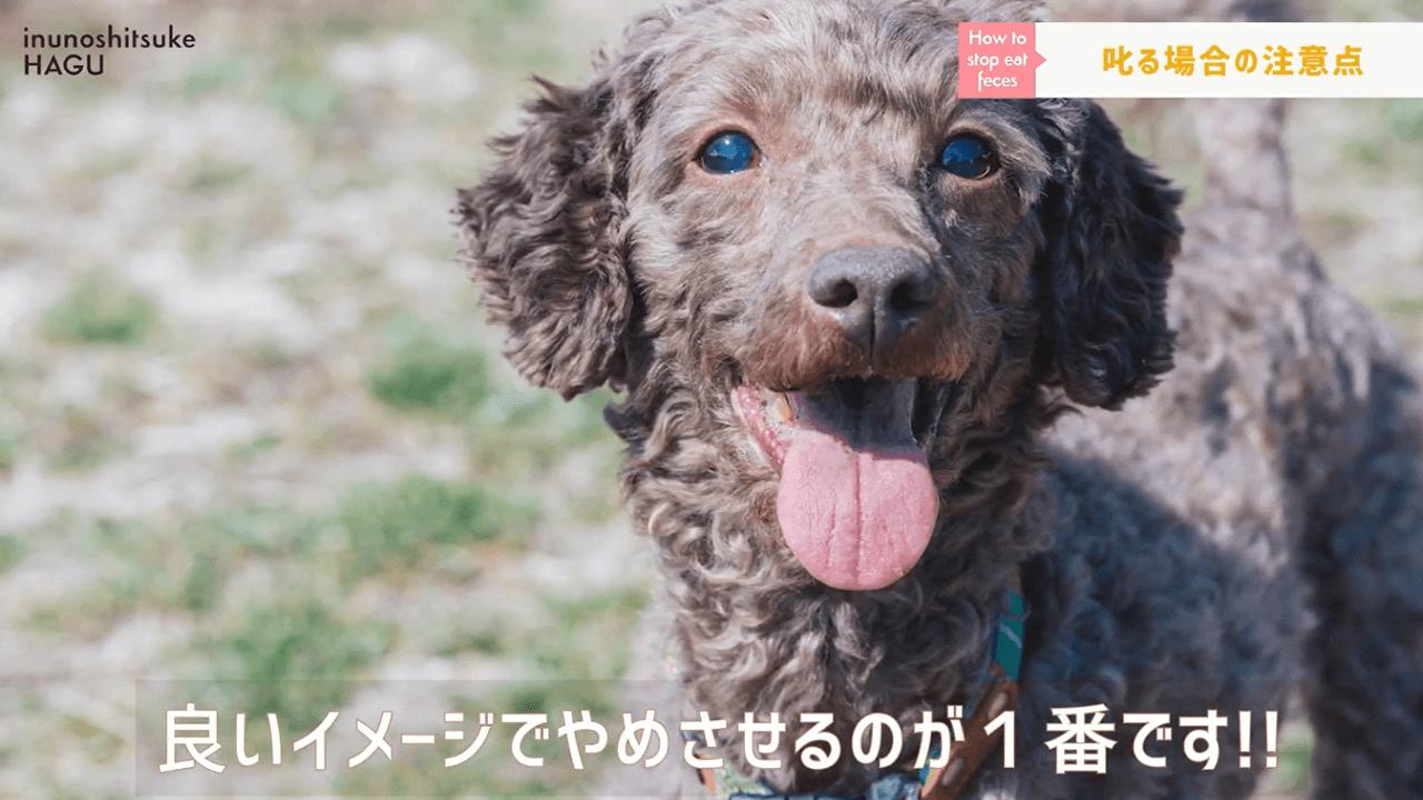舌を出している犬