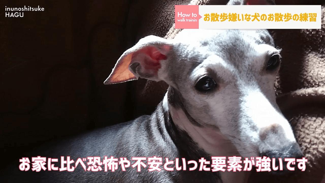 何かを怖がって不安そうな顔の犬