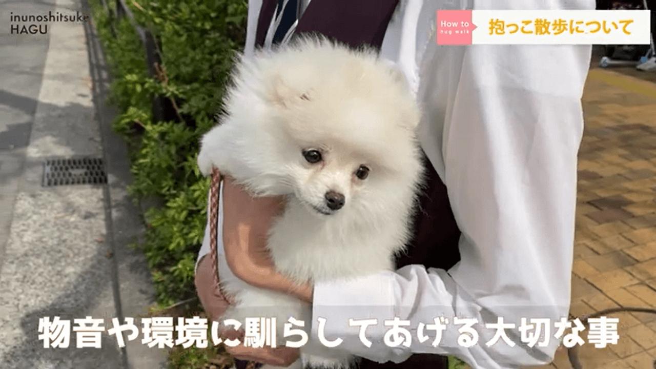犬を抱っこしているドッグトレーナー