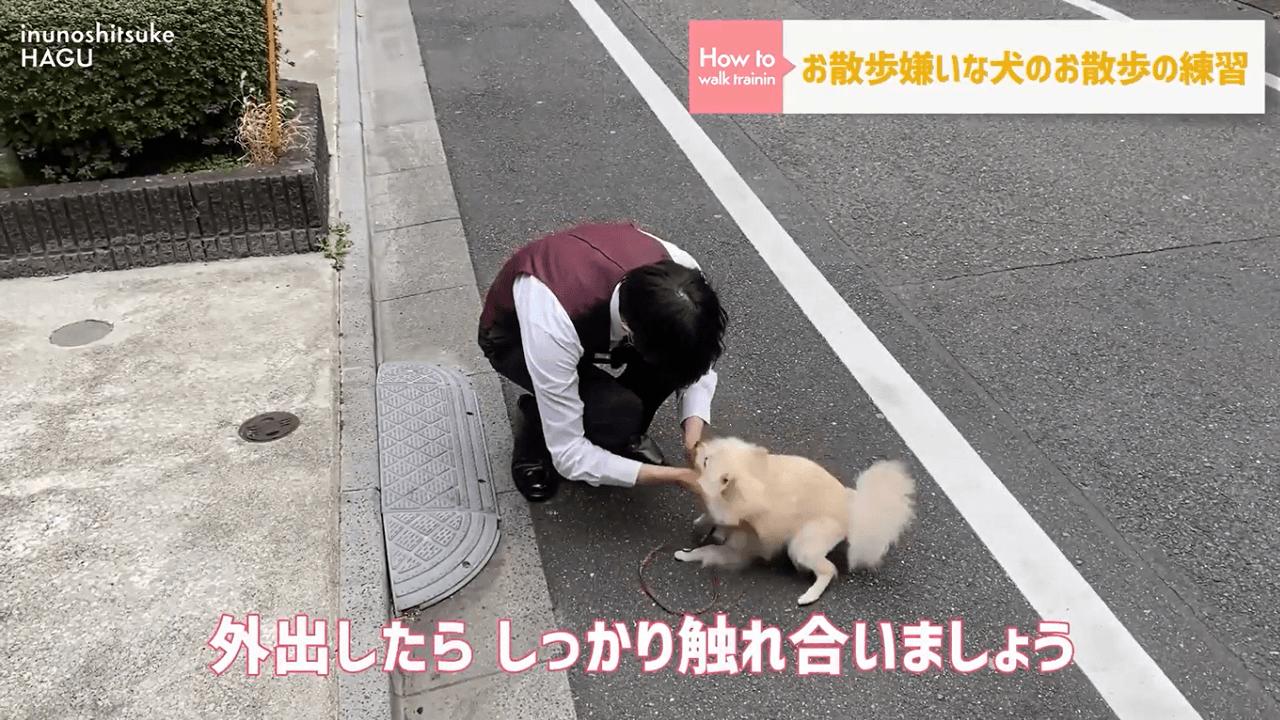 犬と触れ合うドッグトレーナー