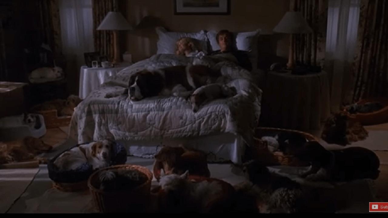 ベッドに2人寝ている周りに沢山の犬達がいる