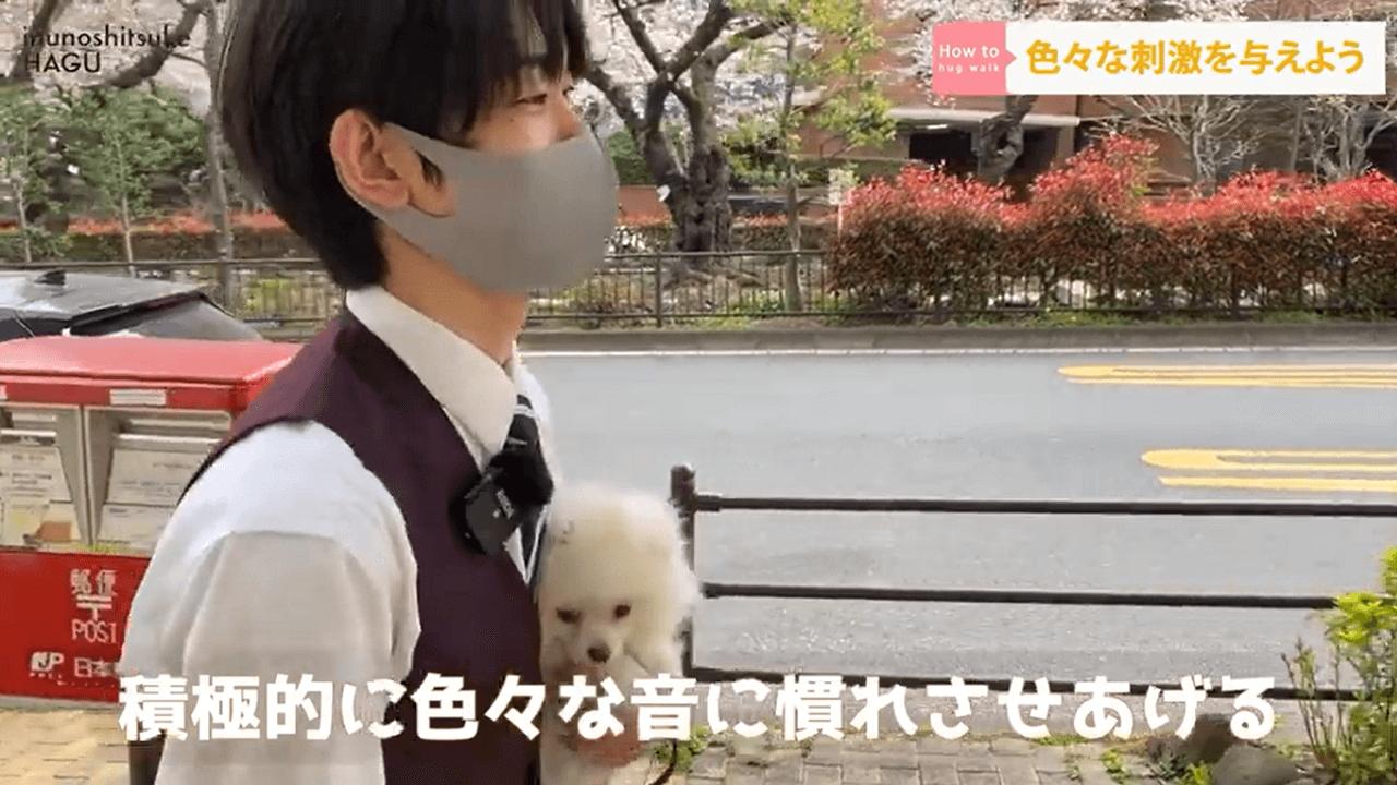 犬の抱っこ散歩をするドッグトレーナー