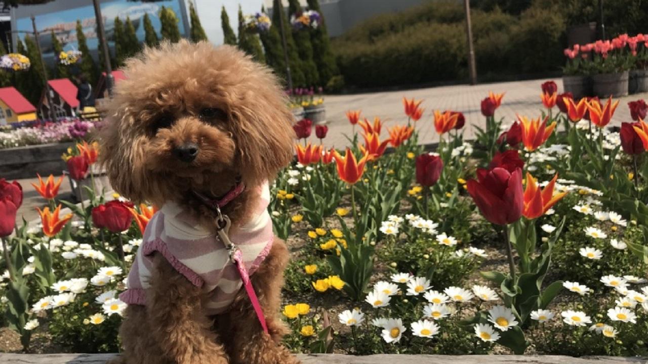 花壇の前に座る犬