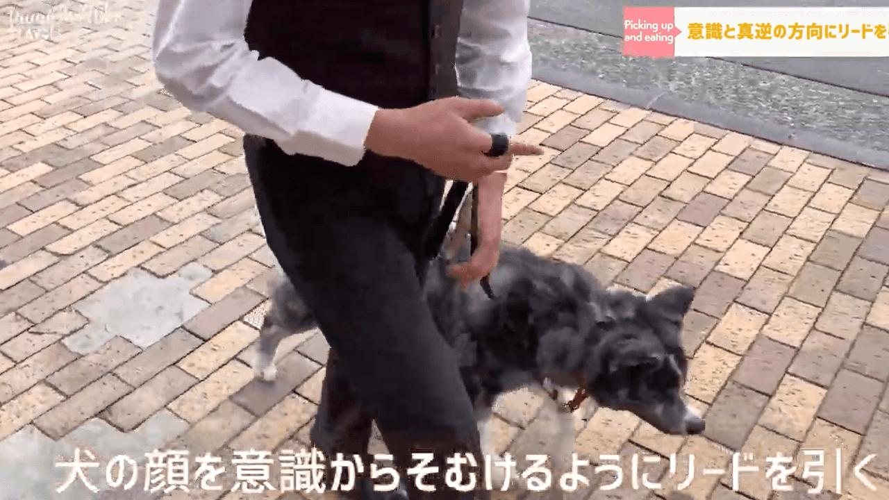 犬の散歩をするドッグトレーナー