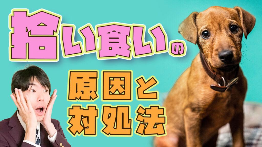 【タバコを食べた?!】愛犬が拾い食いしそうな時の止め方と原因【ドッグトレーナー解説】