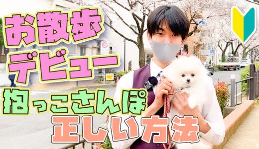 【ワクチン前でも大丈夫!】子犬の散歩はいつから!?ドッグトレーナーが解説します!