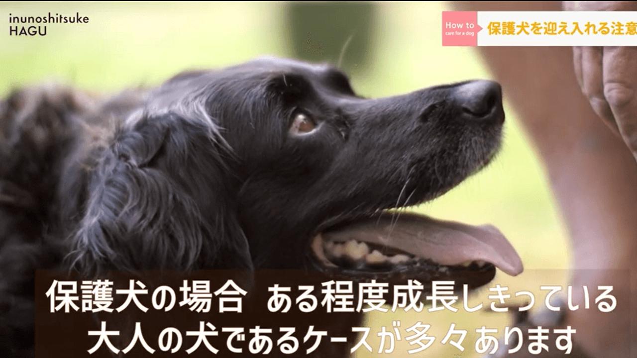口を開けて飼い主さんの方と見ている黒い犬