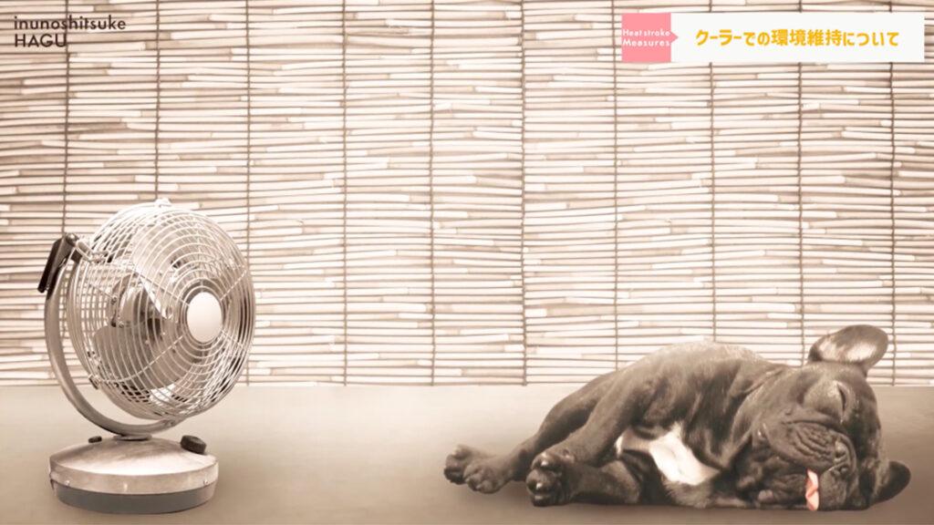 【犬の熱中症対策】愛犬を守れるのはあなただけ!ワンちゃんを熱中症にしない正しい方法教えます!【クーラーの効いた場所】