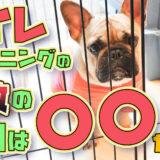 【初心者向け】犬のトイレトレーニング【ドッグトレーナー解説】