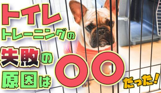 【初心者向け】犬のトイレトレーニング【犬のしつけ教室ドッグトレーナー解説】