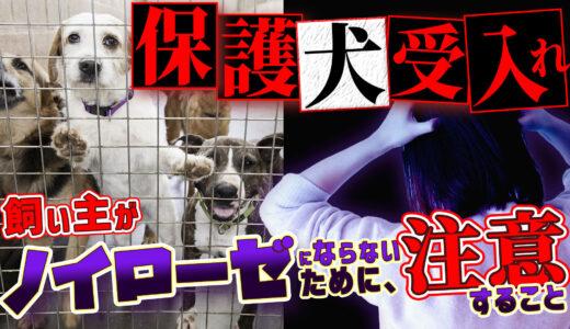 【思っていた子と違う!】保護犬ノイローゼにならないための方法