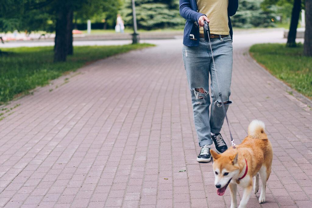 【犬の熱中症対策】愛犬を守れるのはあなただけ!ワンちゃんを熱中症にしない正しい方法教えます!【散歩】