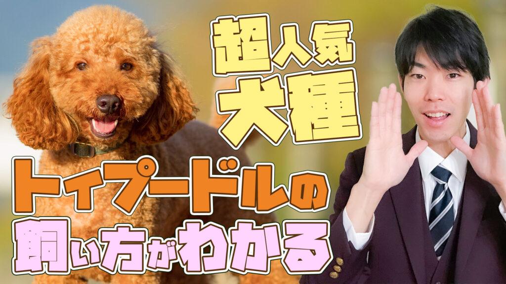 【トイプードル】14分でわかる!「超人気犬トイプードル」の特徴と過ごし方