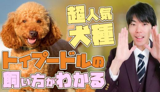 【トイプードル】14分でわかる!「超人気犬トイプードル」の特徴と過ごし方【徹底解説】