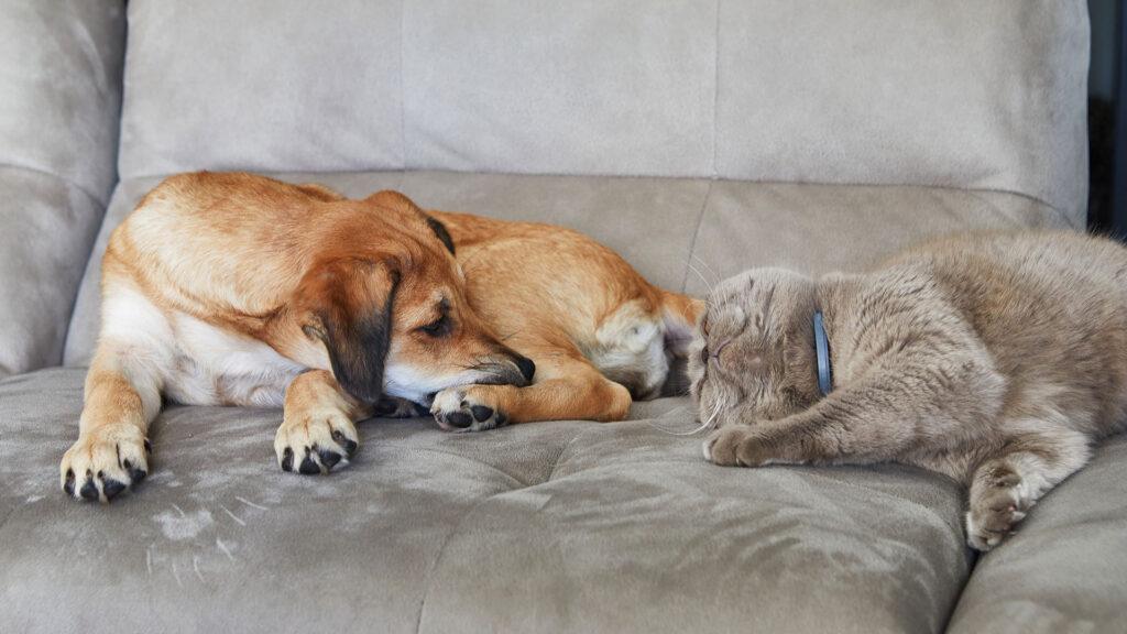 【犬の熱中症対策】愛犬を守れるのはあなただけ!ワンちゃんを熱中症にしない正しい方法教えます!クーラー 健康管理