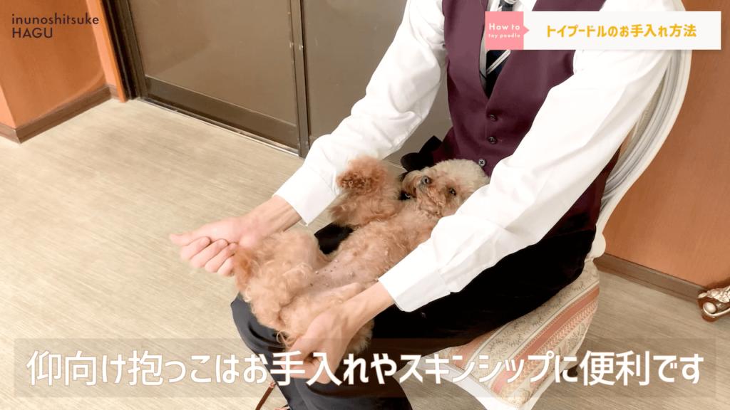 【トイプードル】14分でわかる!「超人気犬トイプードル」の特徴と過ごし方 スキンシップ
