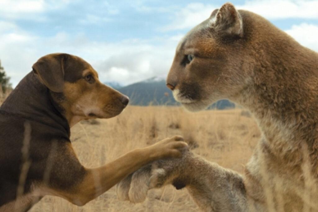 ピットブル犬映画「ベラのワンダフル・ホーム」