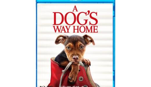 犬映画『ベラのワンダフル・ホーム』ピットブル犬:あらすじ紹介|原作者W・ブルース・キャメロン