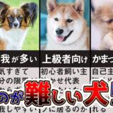【ドックトレーナー解説】飼いづらい犬種5選!飼うことが難しい?