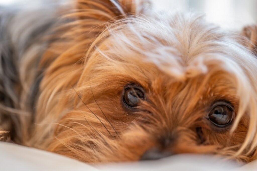 愛犬 手作りレシピ 白身魚のオートミール粥】の作り方 犬の写真